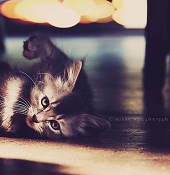 Kitty by pepytta