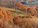 Autumn Horses on Hills
