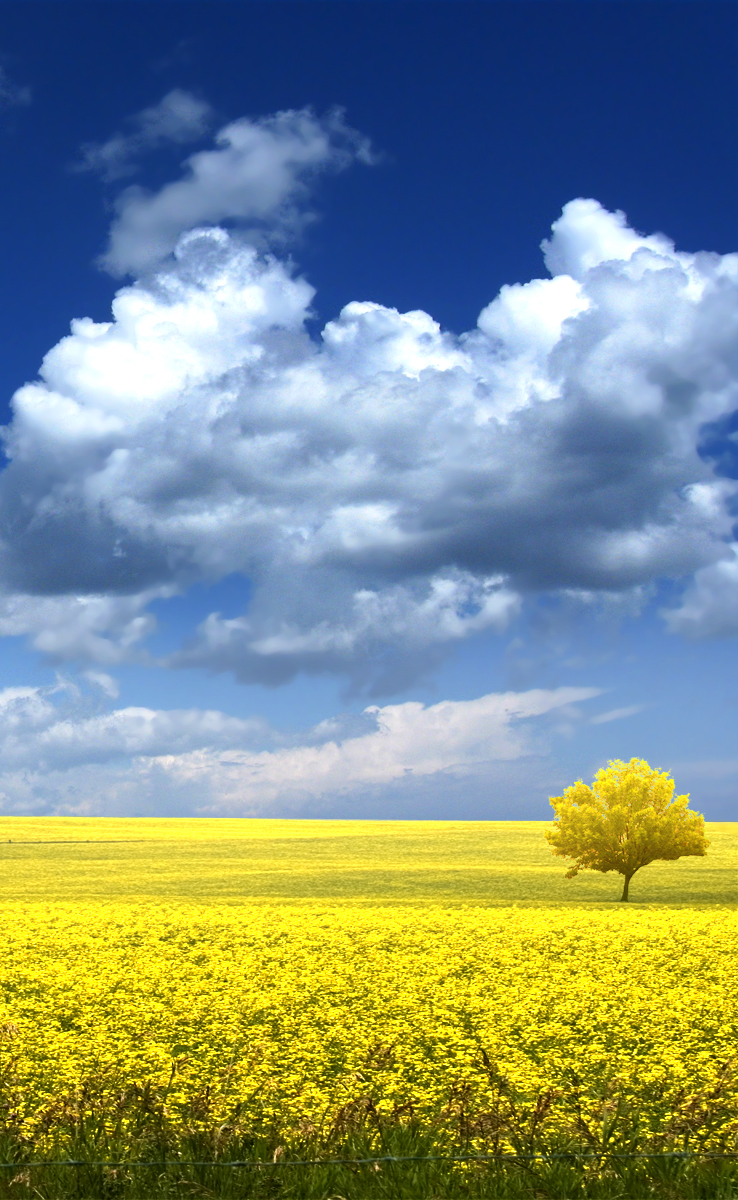 Yellow Field Tree by iNicKeoN