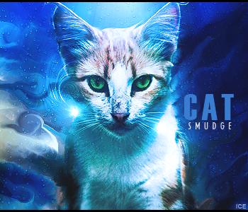 Rate .-. Cat_smudge_colorr_by_junior1115-d30qure