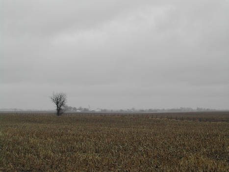 Lonely Tree In Distance