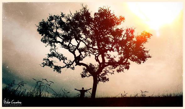 Big Tree and Small Axe by byCavalera