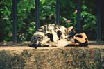Kittens Hug
