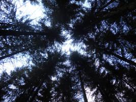 Der Licht Des Himmels