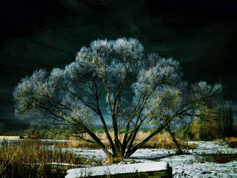 Winter tales by IgorVladi