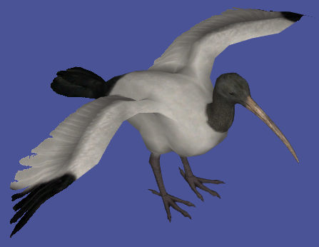 Topics tagged under bird on User - Made Creations Sacred_ibis__zoo_tycoon__by_lamastok-d5tk057