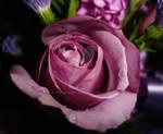 Waterdrop Rose by charmedy