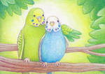 budgies aceo :3