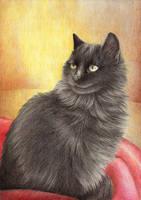 fluffy black cat by yeyeyy