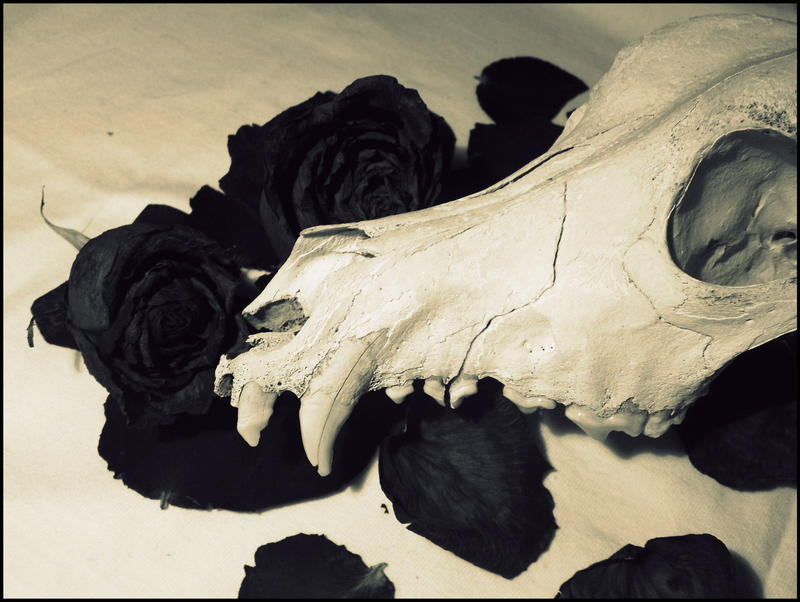 La raison est vaine. by AnnaGrishnackh