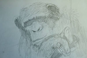 Quick Chimp Study by Clayofmyclay