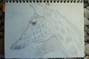 Quick Giraffe Study by Clayofmyclay