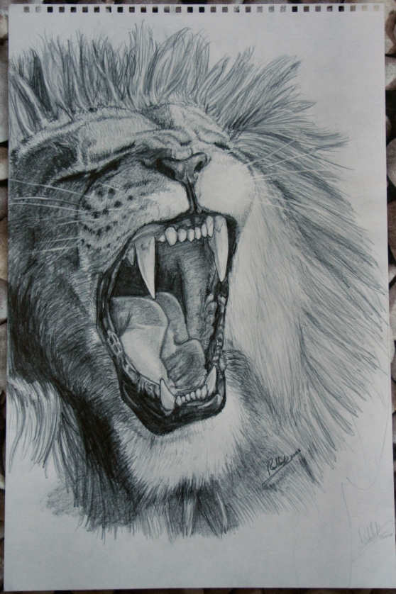 Realistic Lion Roaring... Lion Roaring Drawing