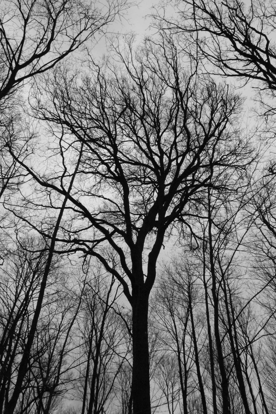 Dark Tree by Canojo-Rebel on DeviantArt