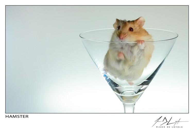 Hamster by eugenedeloyola