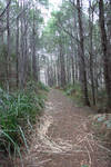 Forrest Path Stock 5