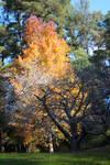 Park Trees Stock 1
