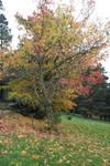 Park Trees Stock 2