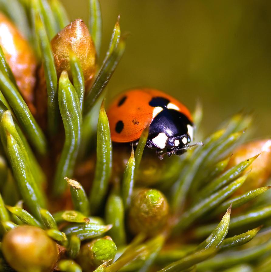 Ladybird in my garden by safe-t