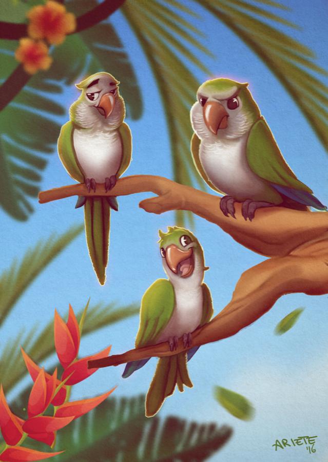 Our Quaker Parrots by thenota