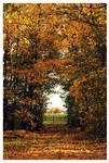 Through autumn wonderland