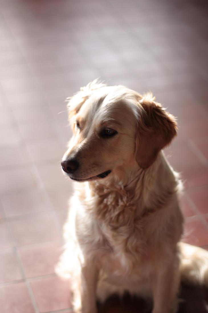 Portrait of a dog by Starlizz