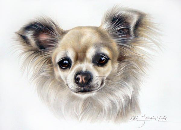 Dibujo De Chihuahua: Chihuahua By Dog-drawing On DeviantArt