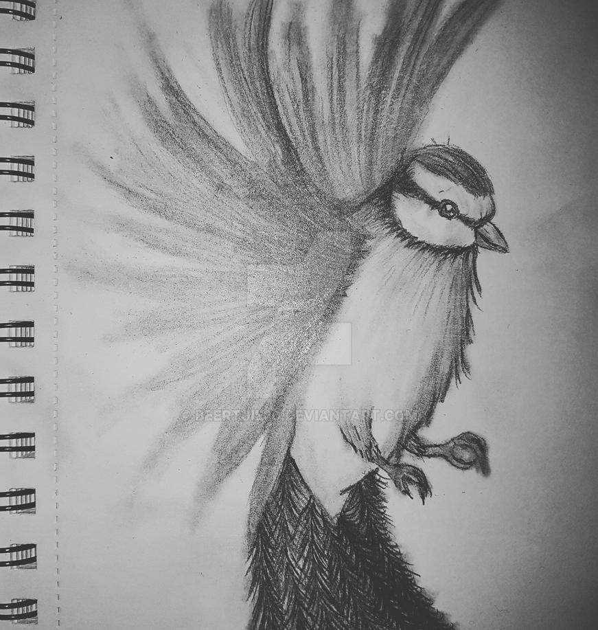 Bird pencil drawing by beertjie30