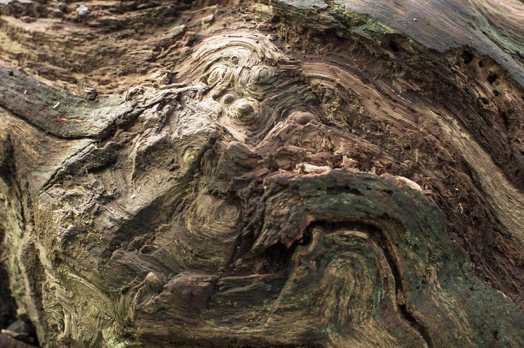 Tree Bark Texture Png Tree Bark Texture Stock 24mp