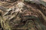 Tree Bark Texture (Stock 24mp)