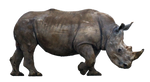 Rhino Cut Out Stock