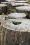 Tree/log stock image by jeffkingston