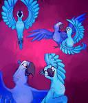 Hot Wings- Rio Studies