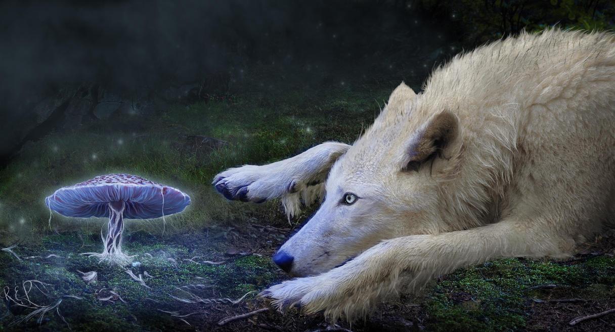 Dream Catcher by RhiskandPeril