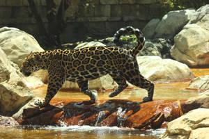 Male Jaguar 3 by RhiskandPeril