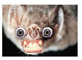 Spoon Bat by pokketmowse