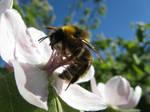 abelhao