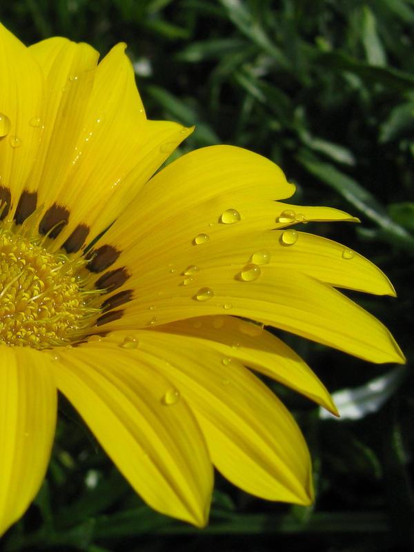 flower by rjdp1