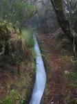 .:Laurisilva forest, Madeira:.