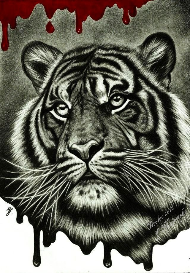 Save The Tiger By Titol87 On Deviantart