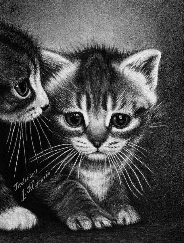 Сделать, картинки котята милые нарисованные карандашом
