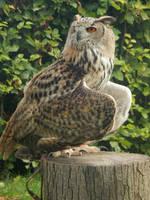 Castlefest - birds of prey 8 by queenofeagles