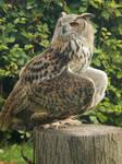 Castlefest - birds of prey 8
