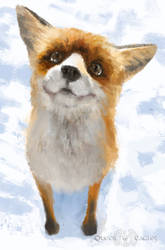 Gift - the fox of wondrous faces by queenofeagles
