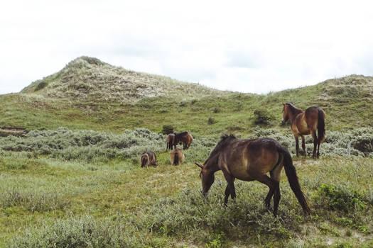 The herd (4)
