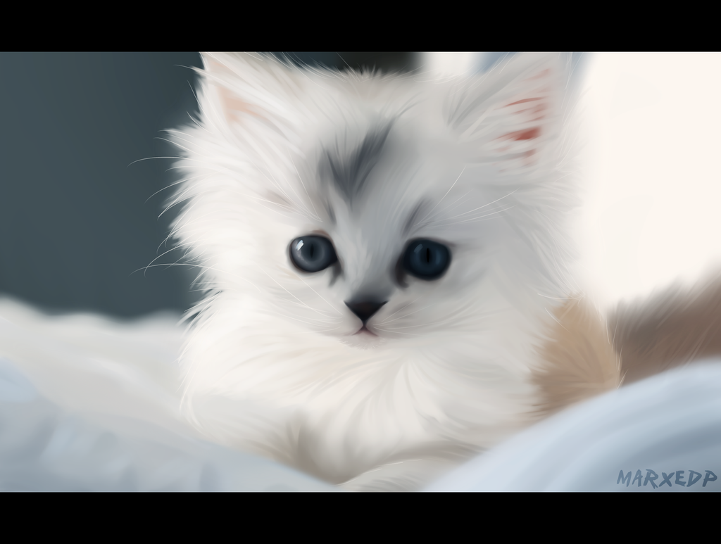 Cute Kitten - Realist Practice by MarxeDP