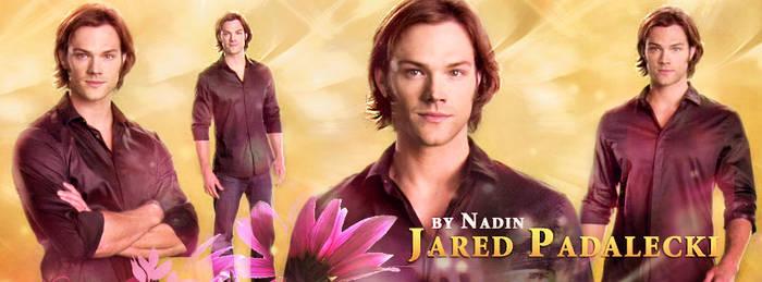 Jared (Banner for Timeline)