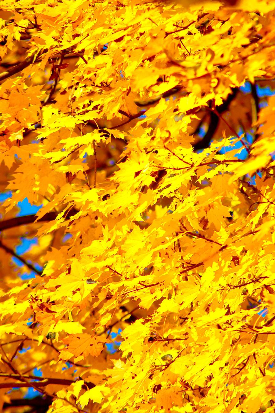 Foliage by Libayne