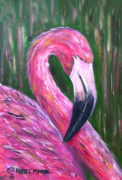 Florida Summer Flamingo 3 Hour Challenge