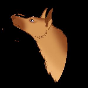 Shlup's Profile Picture